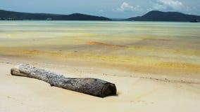 De boomtak ligt op het tropische strand stock footage