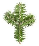 De boomtak van de pijnboom Stock Afbeelding