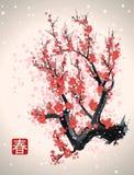 De boomtak van de Sakurabloesem Stock Foto's