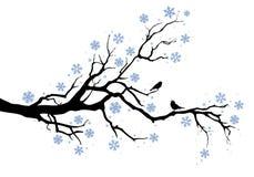 De boomtak van de winter Stock Foto's