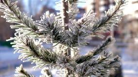 De boomtakken van de close-uppijnboom met rijp worden behandeld die stock videobeelden