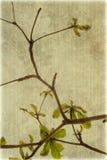 De boomtakken van de amandel op geribbeld perkament royalty-vrije stock foto