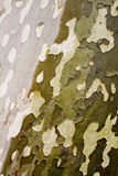 De boomtextuur van de camouflage Royalty-vrije Stock Foto's