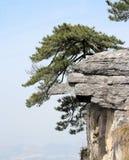 De boomtribune van de pijnboom recht op de reusachtige rots Royalty-vrije Stock Foto's