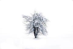 De boomwhit van de winter sneeuw Royalty-vrije Stock Fotografie