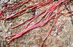 De boomwortel van de textuur stock foto's