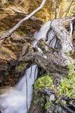 De boomwortel van waterval rotsachtige bergen stock fotografie