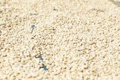 De boon van de koffie Royalty-vrije Stock Foto