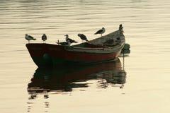 De boot en seagul Royalty-vrije Stock Afbeeldingen
