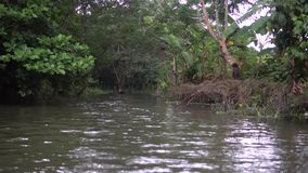 De boot komt Bos & kanaal in Pirojpur, Bangladesh tegen stock footage