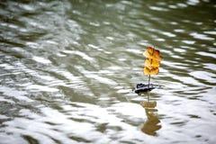 De Boot van de Schors van de boom stock foto's