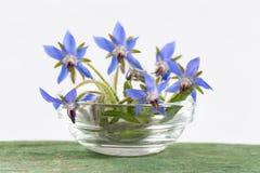 De borage bloeit dicht omhoog (Borago-officinalis Royalty-vrije Stock Foto's