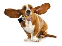 De borstel van de de holdingsverf van de hond stock fotografie