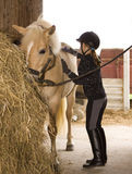 De borstel van het meisje het Paard Stock Fotografie