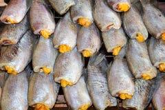 De borstspier Droge vissen van Trichogaster in Thailan Royalty-vrije Stock Afbeeldingen