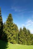 De bos en blauwe hemel van de zomer royalty-vrije stock fotografie