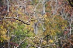 De bos herfst Stock Foto's