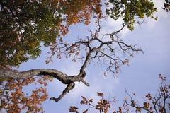 De bos herfst Stock Foto