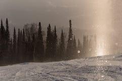 De bos het zonlichtwinter van de sneeuwsneeuwval Royalty-vrije Stock Foto