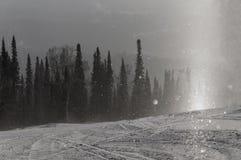 De bos het zonlichtwinter van de sneeuwsneeuwval Royalty-vrije Stock Foto's