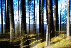 De bos lichte verticale abstractie van de meerhorizon Royalty-vrije Stock Foto
