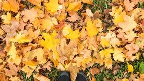De bos op bladeren op het gras royalty-vrije stock afbeeldingen