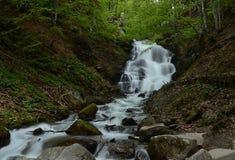 De bos stromende waterval hoog omhoog in de bergen van de Karpaten met lawaai stroomt neer op een achtergrond van bos stock foto's