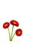 De bos van bloemen Stock Afbeelding