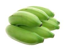 De bos van de banaan Royalty-vrije Stock Fotografie