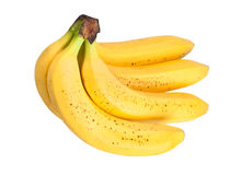 De bos van de banaan Stock Foto