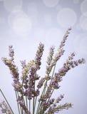 De bos van de lavendel bokeh Royalty-vrije Stock Afbeelding