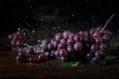 De bos van druif heeft waterplons met donkere achtergrond Royalty-vrije Stock Afbeelding
