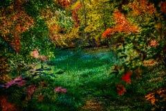 De bos van de de herfstverandering van de open plek abstracte achtergrond stock afbeelding