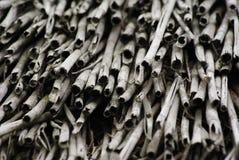 De bos van het riet Stock Afbeeldingen