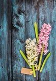 De bos van hyacintbloemen met teken op blauwe houten achtergrond Stock Foto's