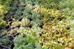 De bos van de landbouwregeling, de landbouw bedrijfs gecultiveerde installaties royalty-vrije stock foto