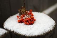 De bos van lijsterbes ligt op sneeuw op de omheining Stock Foto's