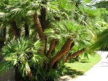 De bos van palm-bloemen Royalty-vrije Stock Afbeeldingen
