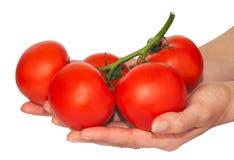 De bos van tomaten in handen Stock Foto's