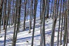 De bos winter royalty-vrije stock afbeelding