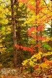 De bosachtergrond van de daling Stock Foto