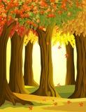 De bosachtergrond van de herfst Royalty-vrije Stock Afbeelding
