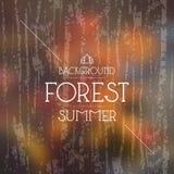 De bosachtergrond van de zomer Warme kleuren Stock Afbeelding