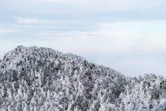 De bosachtergrond van de de winterberg royalty-vrije stock foto's