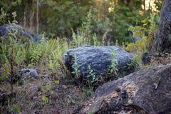 De bosachtergronden van de steile rotsheuvel Royalty-vrije Stock Afbeelding