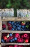 De bosbessen en de frambozenwaterdruppeltjes van de zomerbessen zichtbaar bij 100% Royalty-vrije Stock Afbeeldingen
