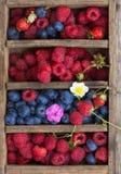 De bosbessen en de frambozenwaterdruppeltjes van de zomerbessen zichtbaar bij 100% Royalty-vrije Stock Foto's