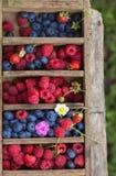 De bosbessen en de frambozenwaterdruppeltjes van de zomerbessen zichtbaar bij 100% Stock Afbeelding