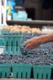 De Bosbessen van de bemonstering bij de Markt van de Landbouwer Royalty-vrije Stock Afbeeldingen