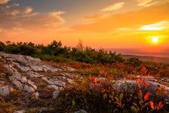 De bosbessenstruiken draaien een mooi levendig rood in de vroege herfst stock foto